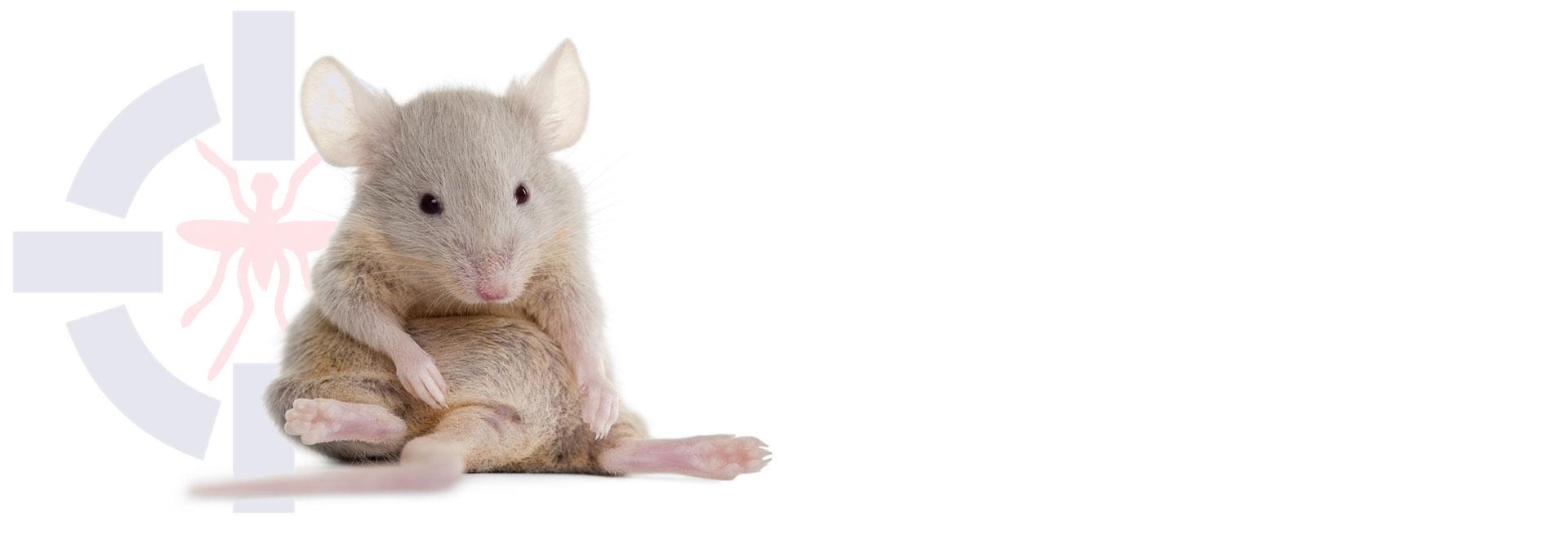 سمپاشی انواع موش