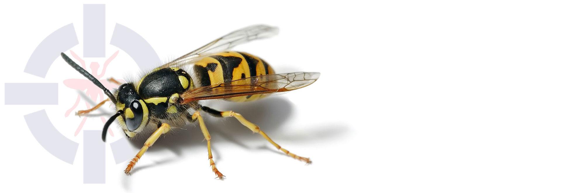 سمپاشی انواع زنبور