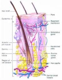 داروي گياهي رشد و تقويت موهاي ابرو و سر