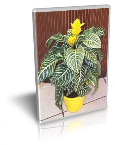آموزش پرورش گل و گیاه آپارتمانی