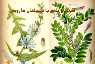 مجموعه ی آشنایی با گیاهان دارویی + اشانتیون