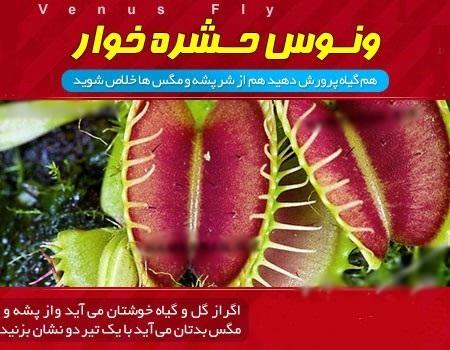 گیاه ونوس حشره خوار