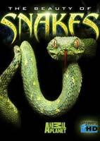 The Beauty of Snakes – مستند زیبایی مارها