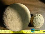 سنگهای فسیل خارپوستان راف و طبیعی  Echinoid Family Fossil