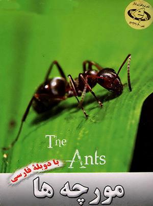 مستند دیدنی مورچه ها /اورجینال