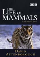 The Life of Mammals – مستند زندگی پستانداران