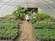 طرح توجیه فنی ، مالی و اقتصادی پرورش گل و گیاه در گلخانه ( پیتوس و نخل زینتی ) ../اورجینال