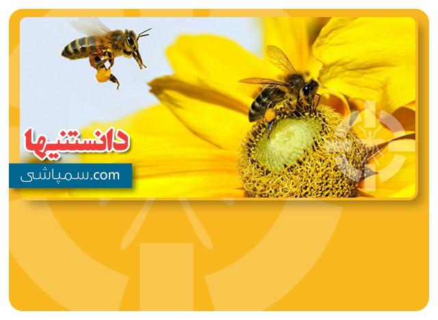 زنبورها