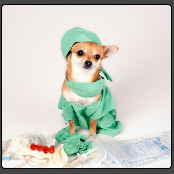 جراحی حیوانات