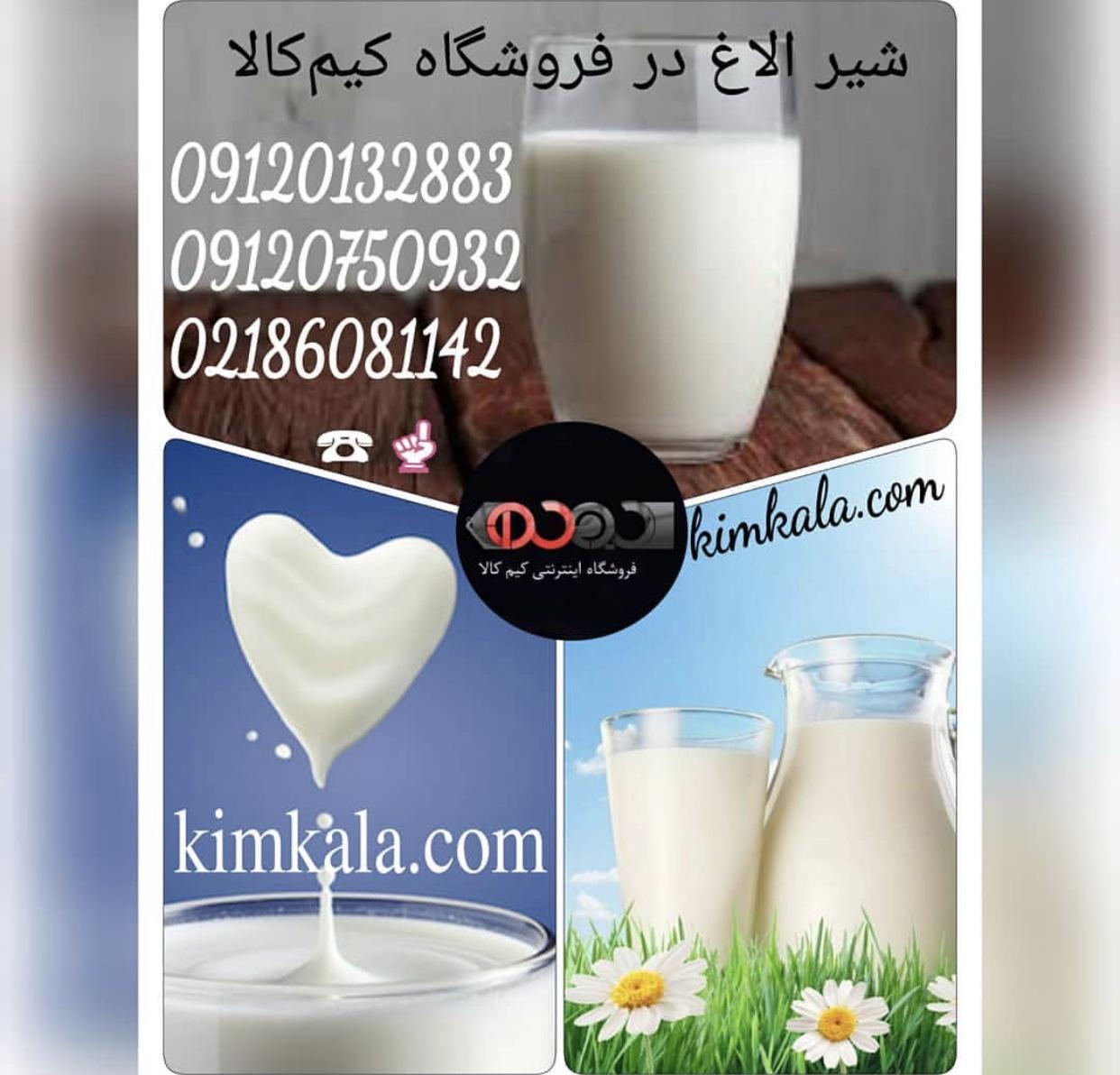 شیر الاغ 09120132883 درمان بی خوابی