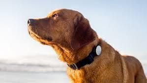 ردیاب حیوانات|بهترین و با کیفیت ترین ردیاب حیوانات|09190678478