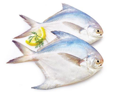 ماهی حلوا سفید کوچک