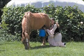فروش شیر اسب