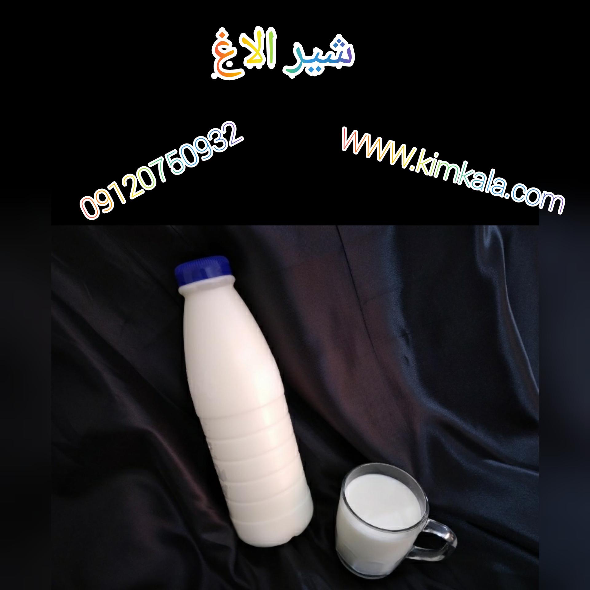 شیر الاغ/09120750932/قیمت شیر الاغ