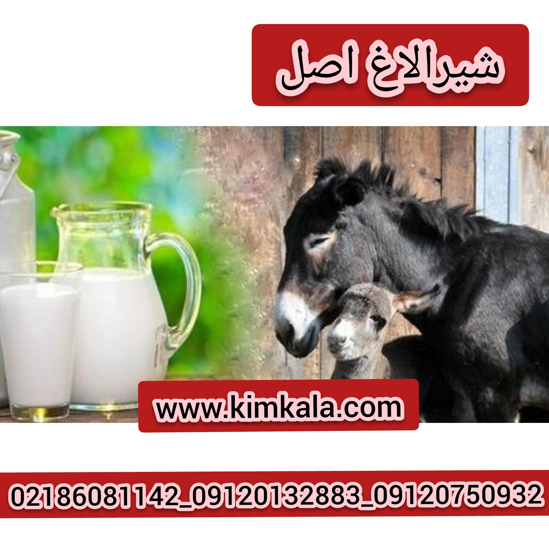 شیرالاغ تازه۰۹۱۲۰۱۳۲۸۸۳/قیمت شیرالاغ اصل/خواص شیرالاغ